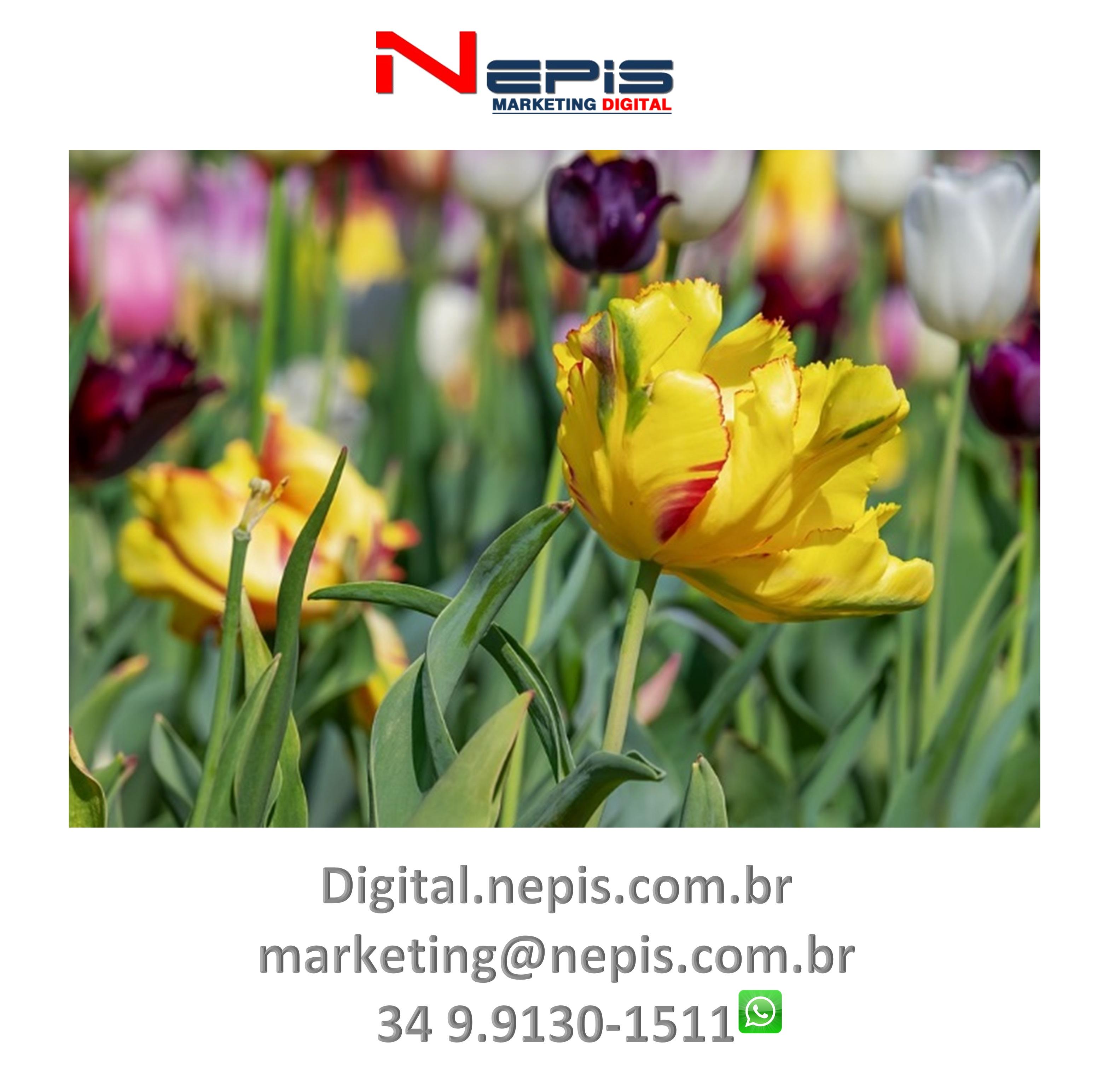NEPIS Digital Publicidade camapanha flores II