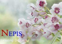 Sua empresa nas redes sociais nos buscadores e na internet.  NEPIS – Uberlândia MG