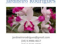 Jardineiro em Uberlândia LR Prestação de Serviços