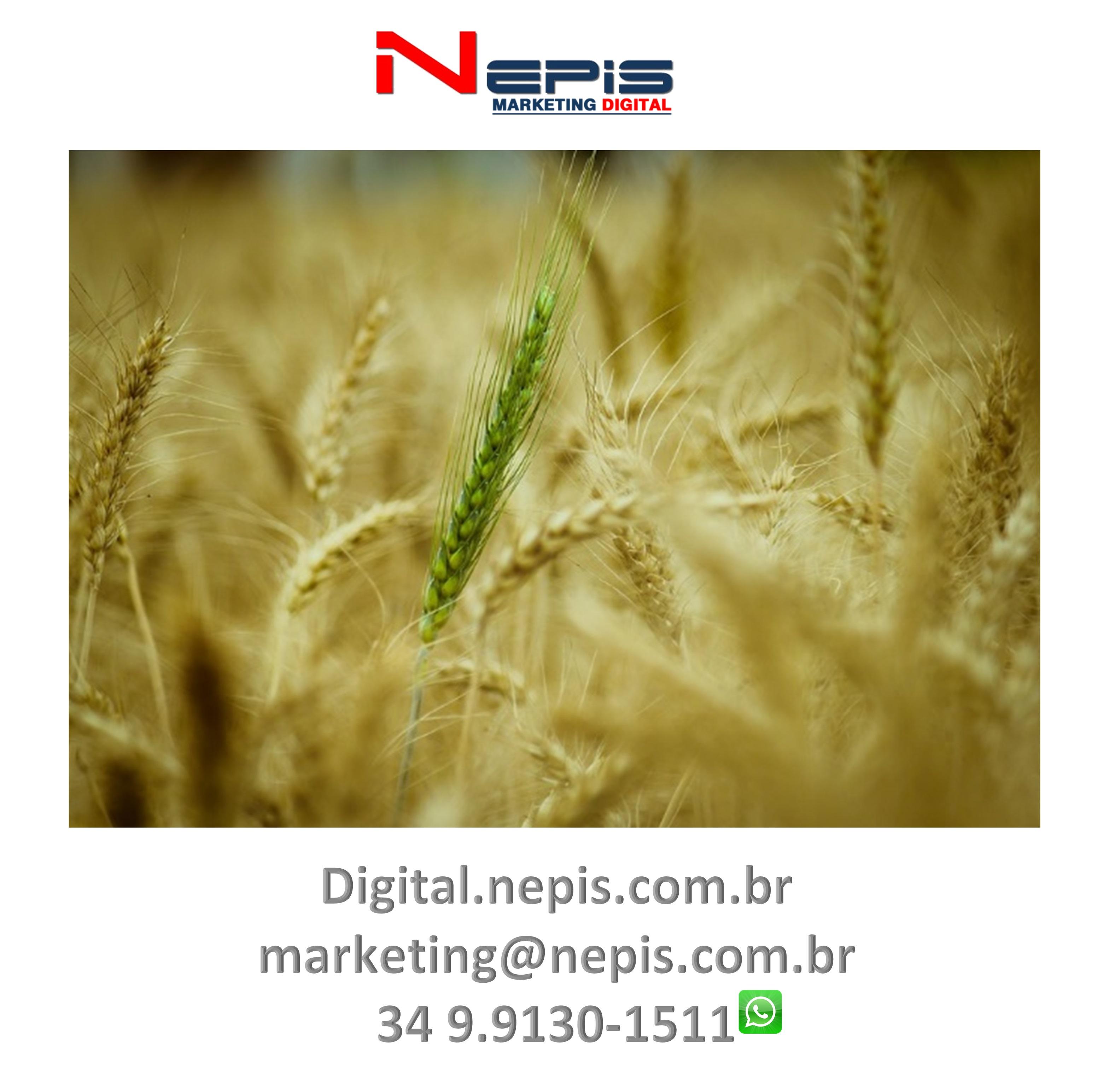 NEPIS Digital Publicidade camapanhas 1